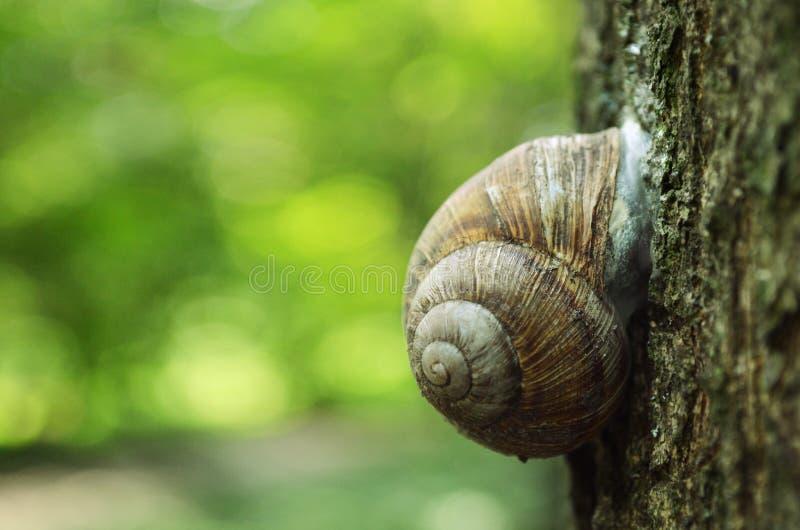 Slak die op een boomboomstam kruipen in het bos stock foto's