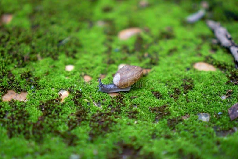 Slak die op mosgebied lopen royalty-vrije stock afbeeldingen
