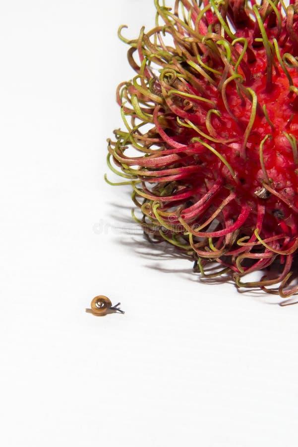 Slak en Rambutan-fruit royalty-vrije stock foto