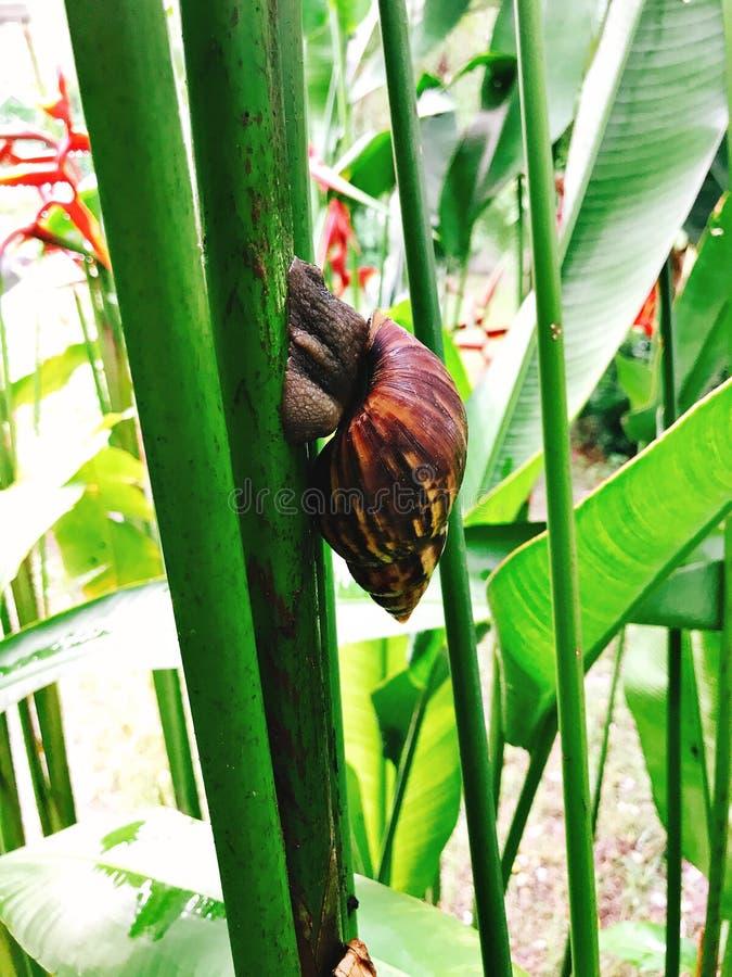 Slak en Strelitzia-reginae of Strelitzia-de kraanbloem of de Paradijsvogel bloeien stock fotografie