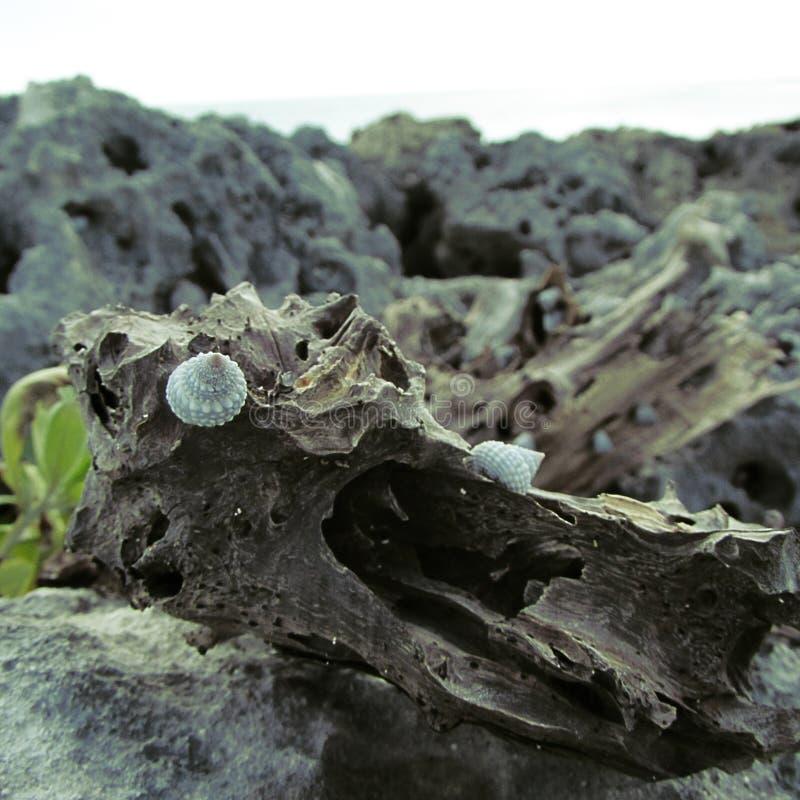 Slak op de boomstam op de steen stock afbeelding