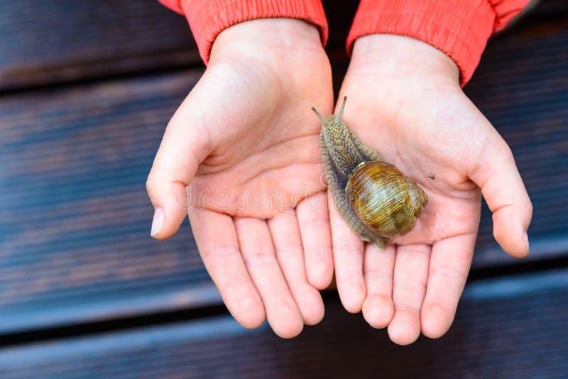 Slak op kindhand op de terrasachtergrond stock foto