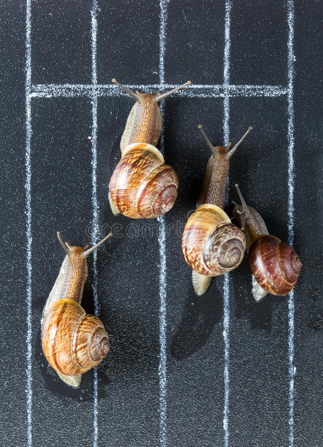 Slakken op het atletische spoor stock foto