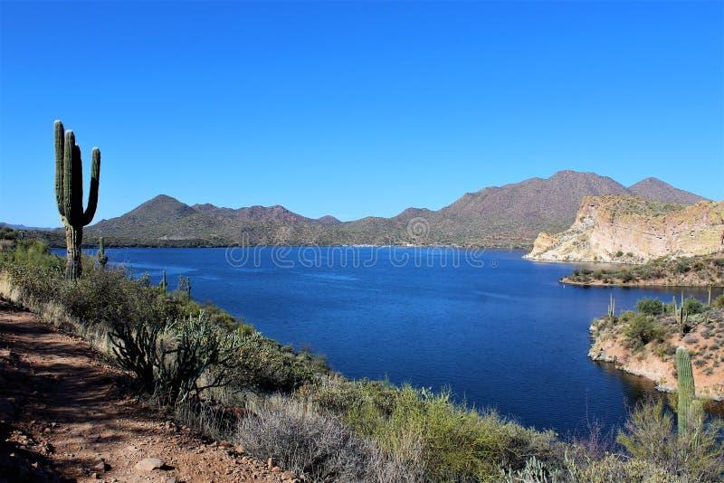 Slaktare Jones Beach Arizona, Tonto nationalskog fotografering för bildbyråer
