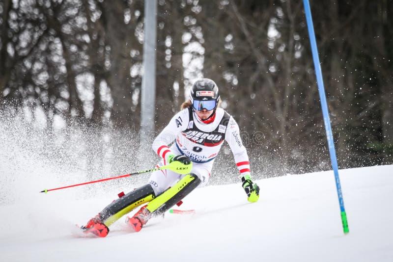 Slalom dos homens do campeonato do mundo de Audi FIS imagem de stock