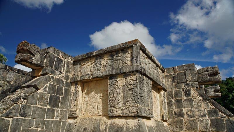 Slang hoofdgravure in de Wildernis van Yucatan stock afbeeldingen