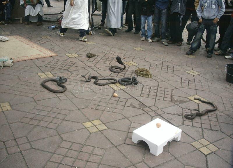 slangen royalty-vrije stock fotografie