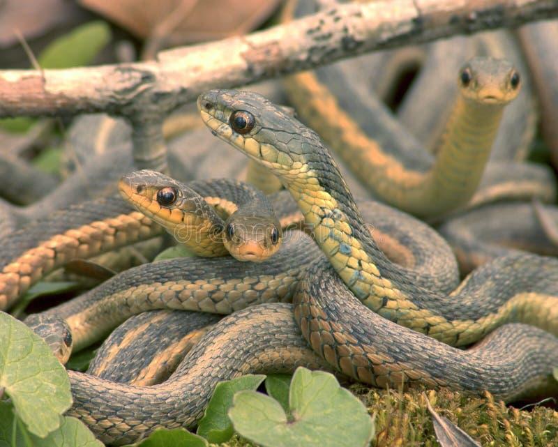 Slangen stock foto's