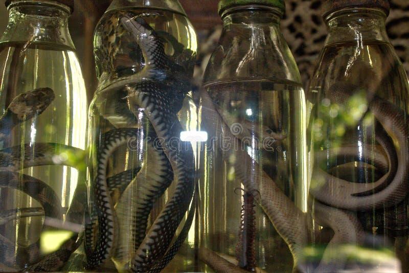 slangen in alcoholfles stock fotografie