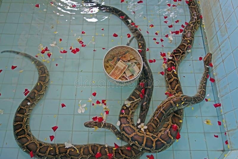 Slangen bij tempel in Paleik, naast Mandalay royalty-vrije stock foto's