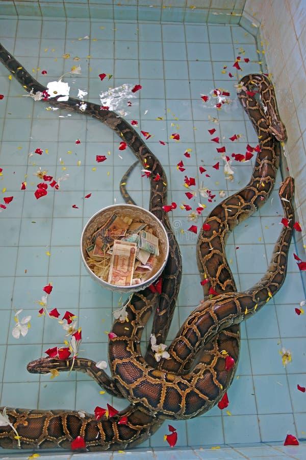 Slangen bij tempel in Paleik, naast Mandalay royalty-vrije stock afbeeldingen