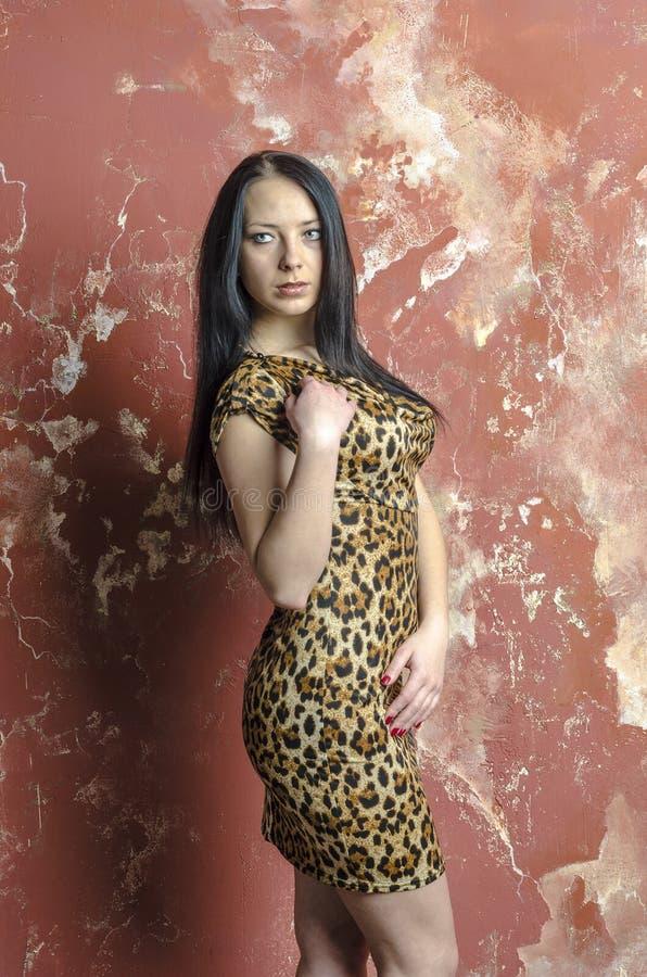 Slank donkerbruin meisje met lang haar in de kleding van de luipaarddruk stock fotografie