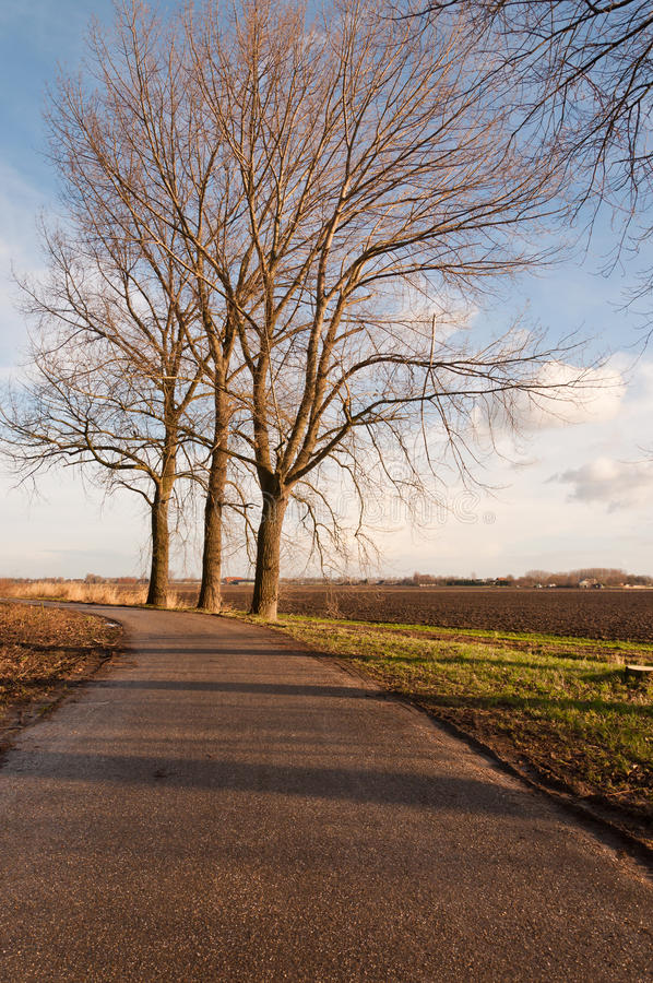Slanted elms waiting for harvesting royalty free stock images