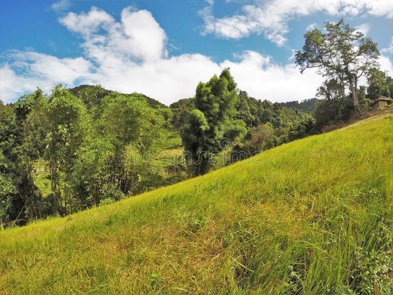 Slanted green grass meadow with background of trees and mountains stock images