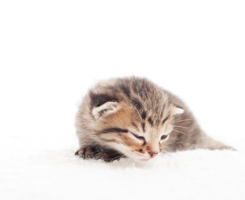 Slaperig gestreepte katkatje stock foto's