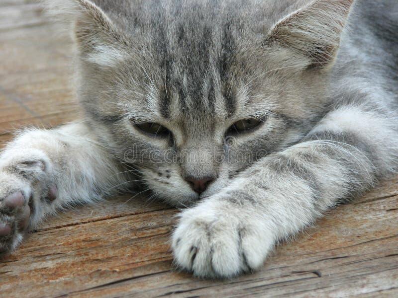 Slaperig grijs katje royalty-vrije stock foto