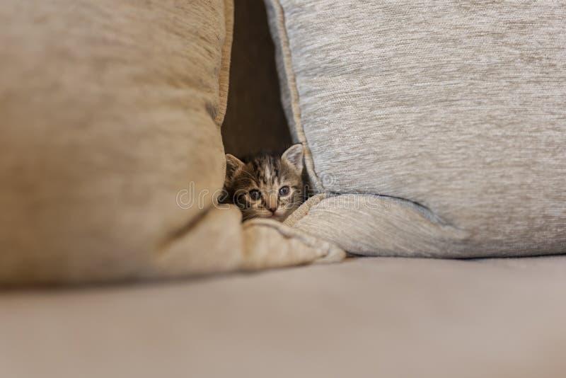 Slaperig katje die van de bank gluren stock foto