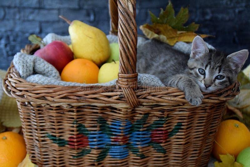 Slaperig katje in een mand met vruchten royalty-vrije stock afbeeldingen