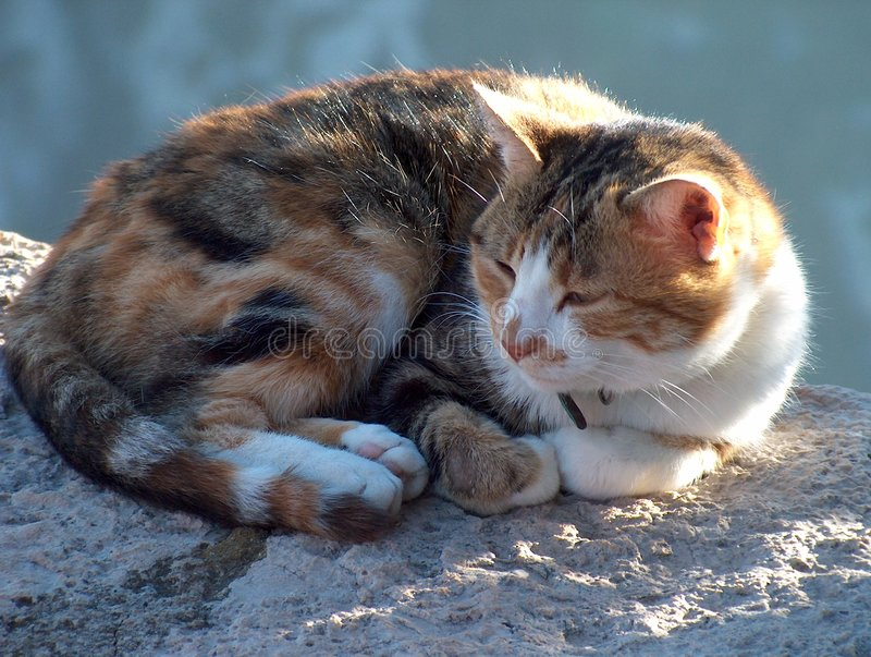 Slaperige kat stock fotografie