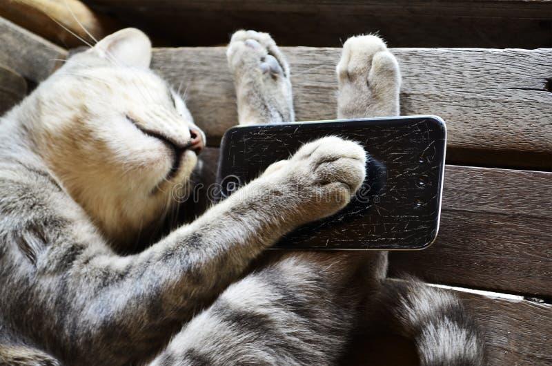 Slaperige Kat stock foto