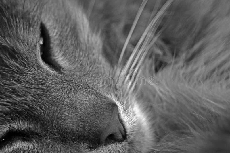 Slaperige kat stock afbeeldingen