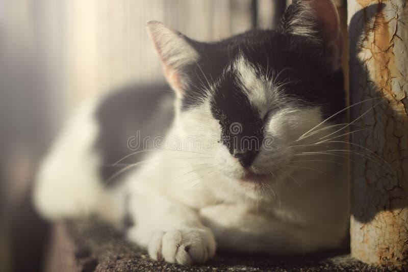 slaperige kat op een de zomerdag royalty-vrije stock afbeeldingen