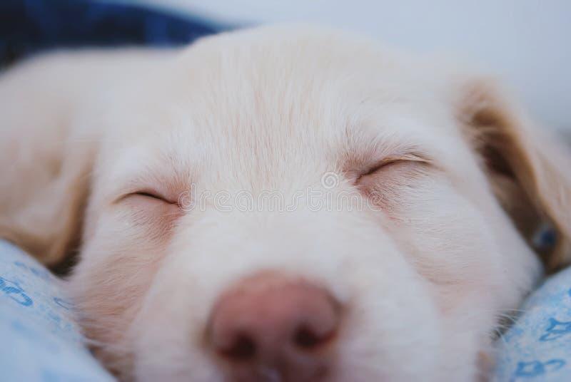 Slaperige leuke hond stock afbeelding