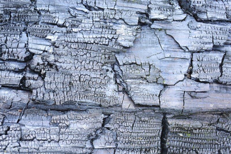 slapp fokus Bränd till kol träabstrakt bakgrund Närbild av ett varmt bränt till kol stycke av vedträ arkivbild