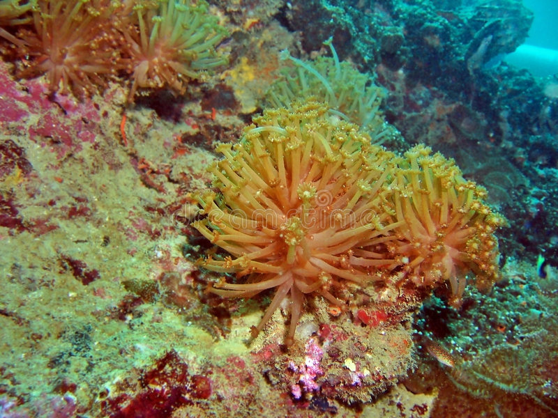 slapp korallrev royaltyfria foton