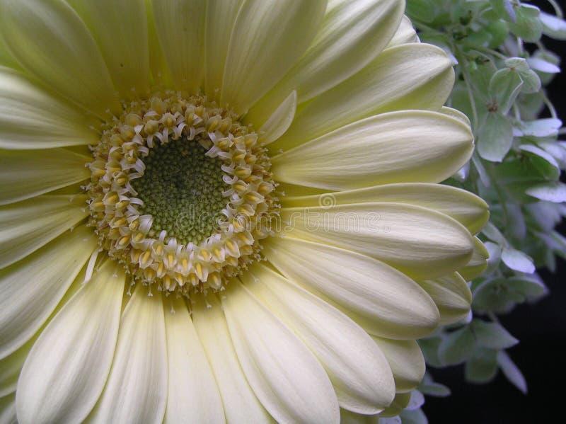Download Slapp skönhet arkivfoto. Bild av natur, valentin, kronärtskockan - 233074