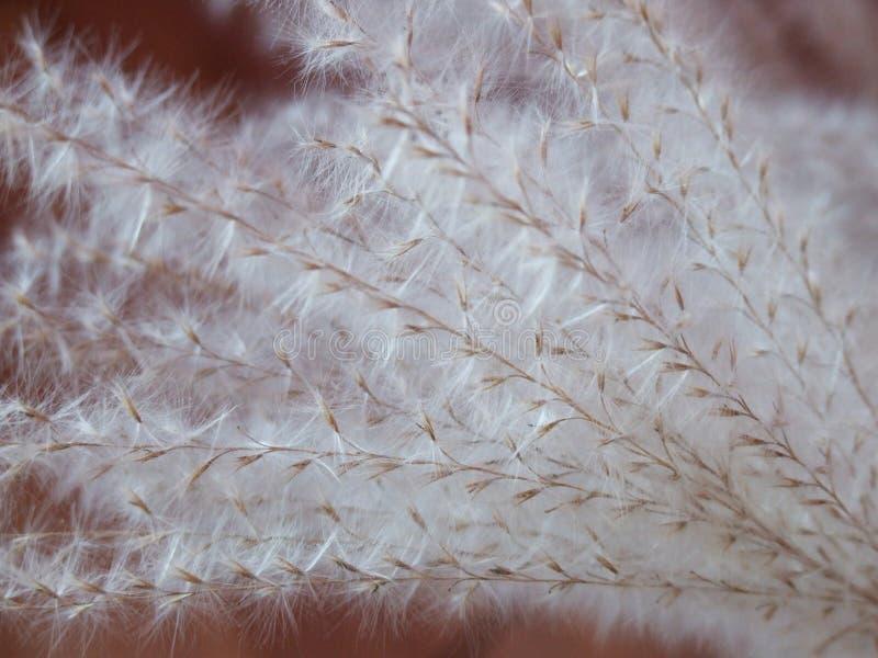 slappt furry gräs för blad royaltyfria bilder