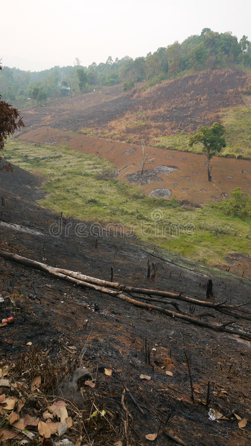 Free Slash And Burn Agriculture In Thailand Royalty Free Stock Photo - 19195055