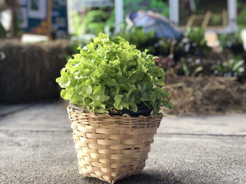 Slat. Oganic vegettable basket royalty free stock images