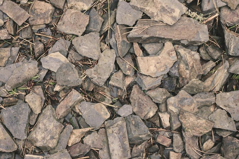 Slate. On the floor of a farmed connifer forest stock photography