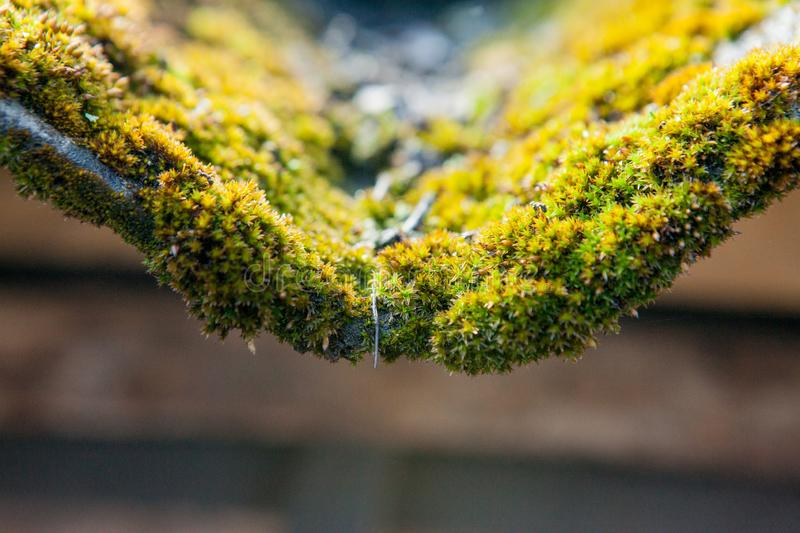 Slate roof is covered with green moss royalty free stock photo
