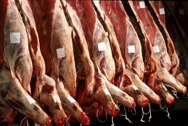 Slaughter of beef. A slaughterhouse for slaughter beef royalty free stock photography