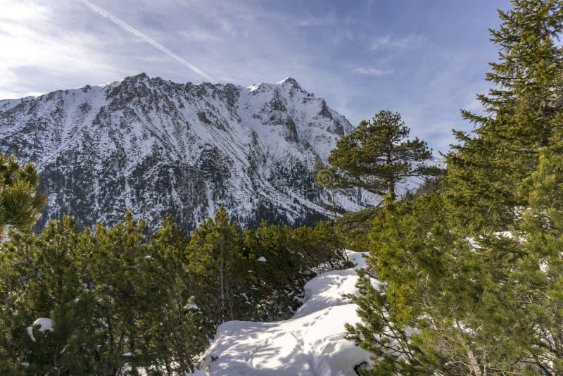 Slavkovsky maximum i ett härligt vinterlandskap Höga Tatra Mounta arkivbilder