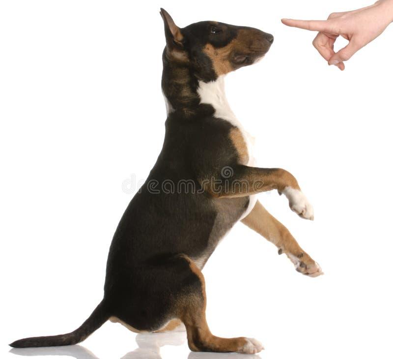 Slechte hond stock afbeeldingen