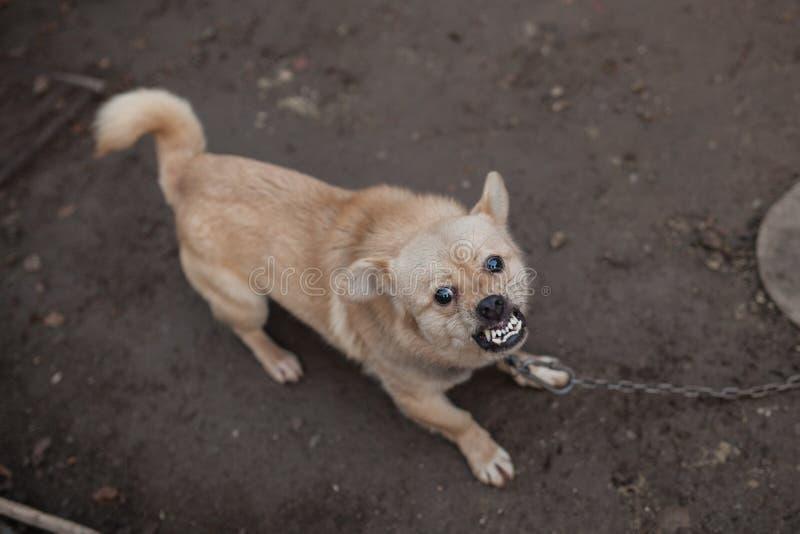 Slechte hond royalty-vrije stock foto's