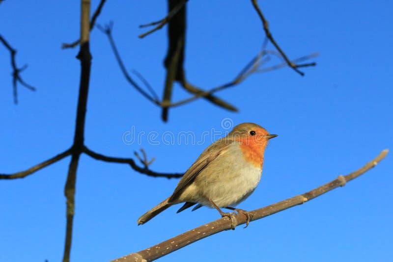 Slechte Koude koude Weinig Vogel stock fotografie