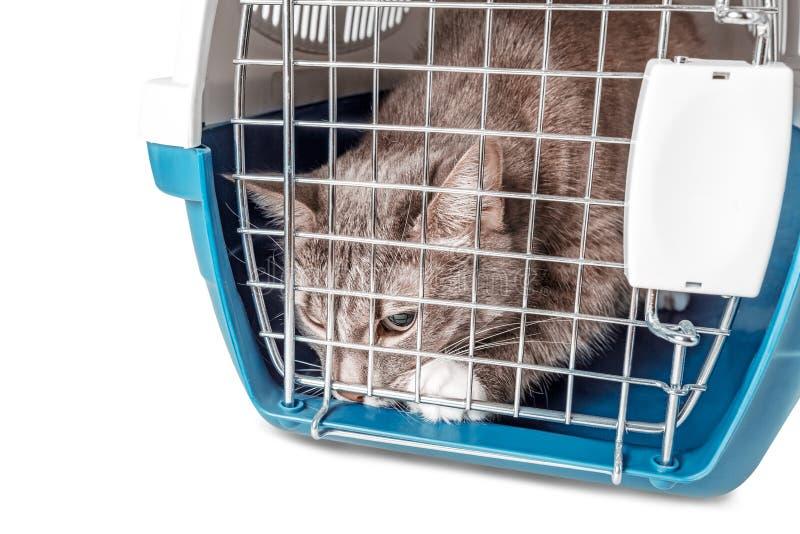 Slechte verloren dakloze kattenzitting in kooi het dragen stock afbeelding