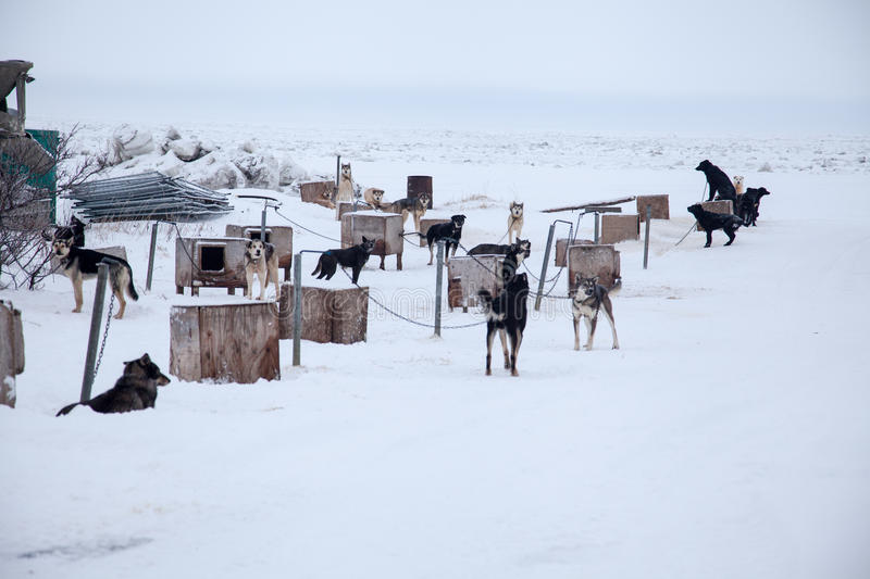 Download Sled Dog Team Stock Photos - Image: 37692063