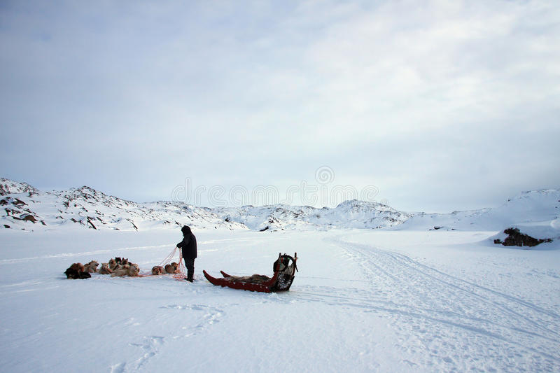 Sled, dog team and hunter stock photography