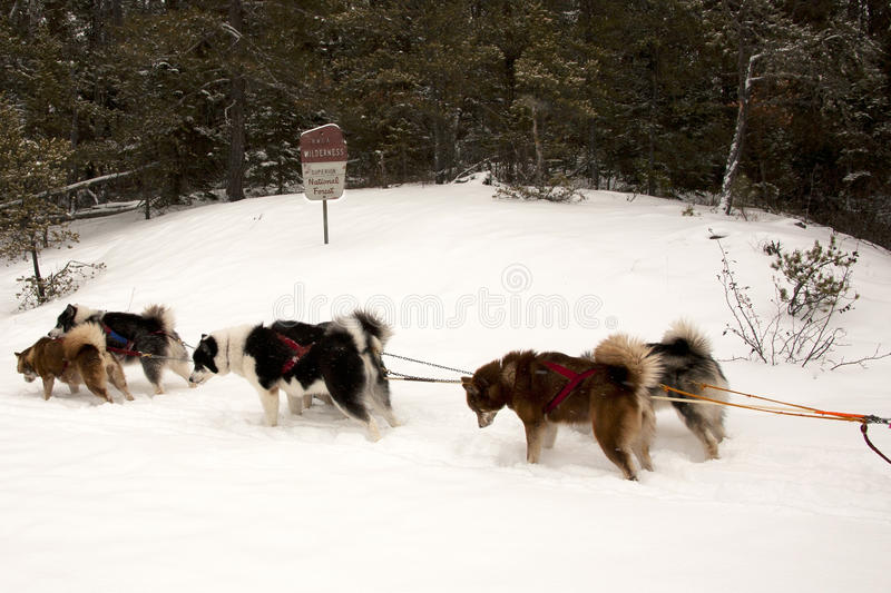 Sled Team in the Boundary Waters stock photography