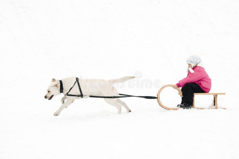 sledding vinter för hund royaltyfri foto