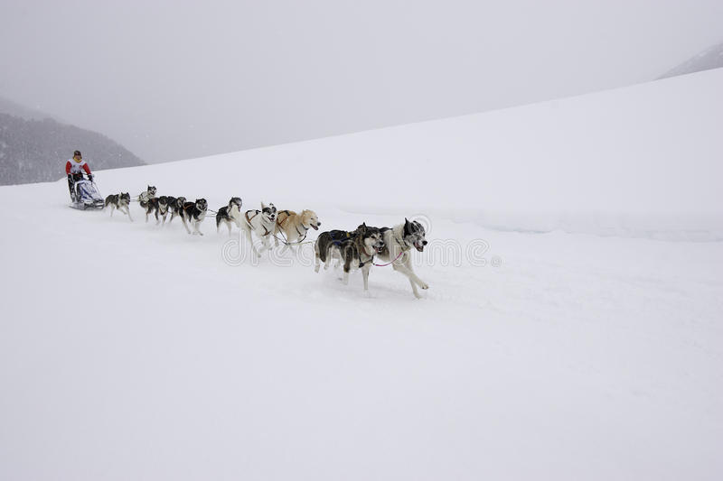 Sleddog race stock photos