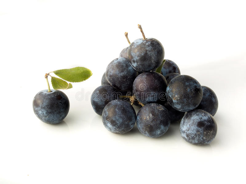 Sleedoorn, Prunus-spinosa - sleedoorn op een witte achtergrond stock fotografie