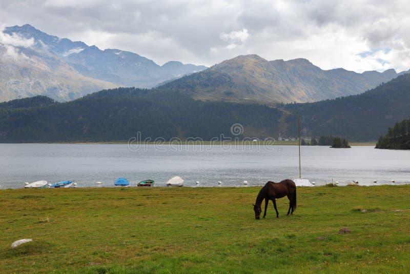 Download Sleek  bay horse grazing stock image. Image of grazing - 17113407