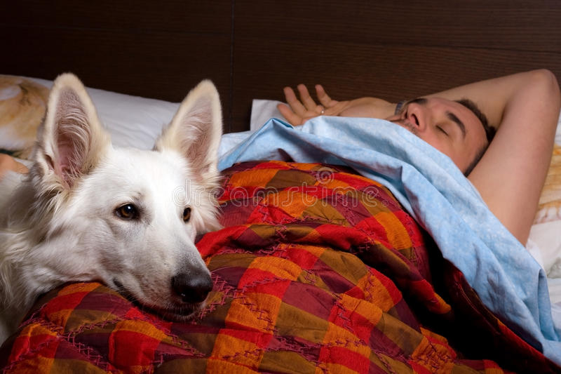 Download Sleep stock image. Image of blanket, pillow, friends - 22213119