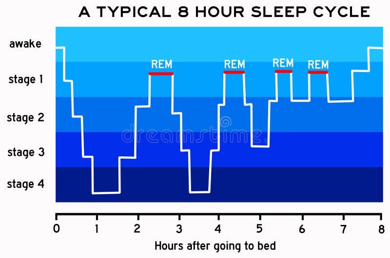 Sleep cycle royalty free illustration